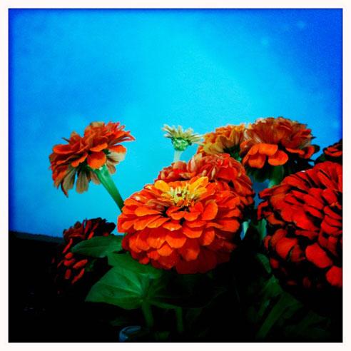 cococello-marigold-IMG-1306