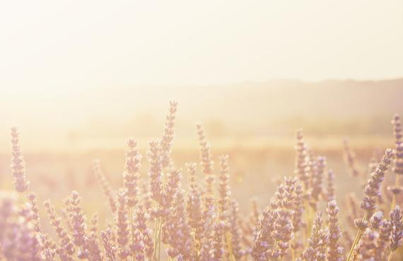 Provence inspiration