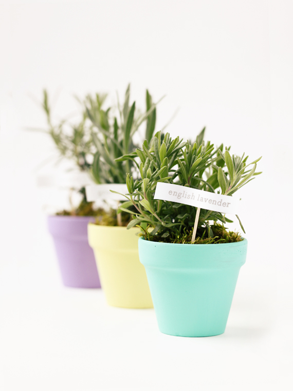 Mini Herb Pots For Mothers Day Julep