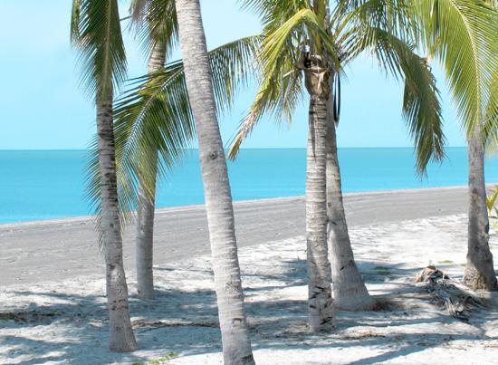 trees in panama