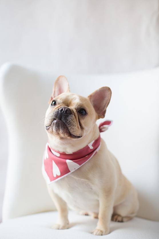 DIYValentines Day Dog Bandana Julep